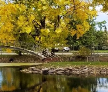 fall leaves at Driggs Bridge
